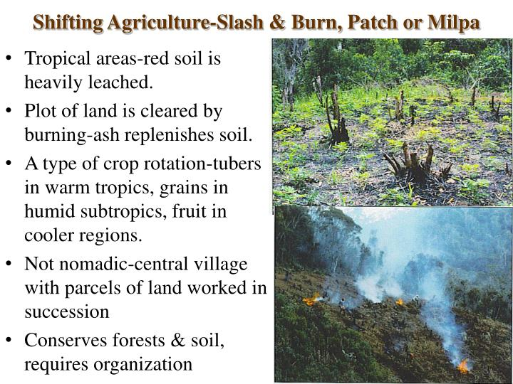 Shifting Agriculture-Slash & Burn, Patch or Milpa