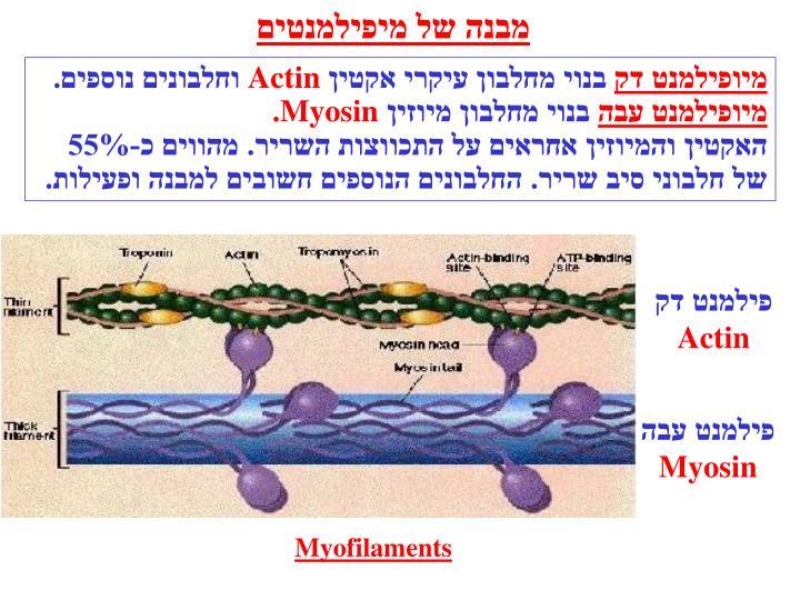 מבנה של מיפילמנטים