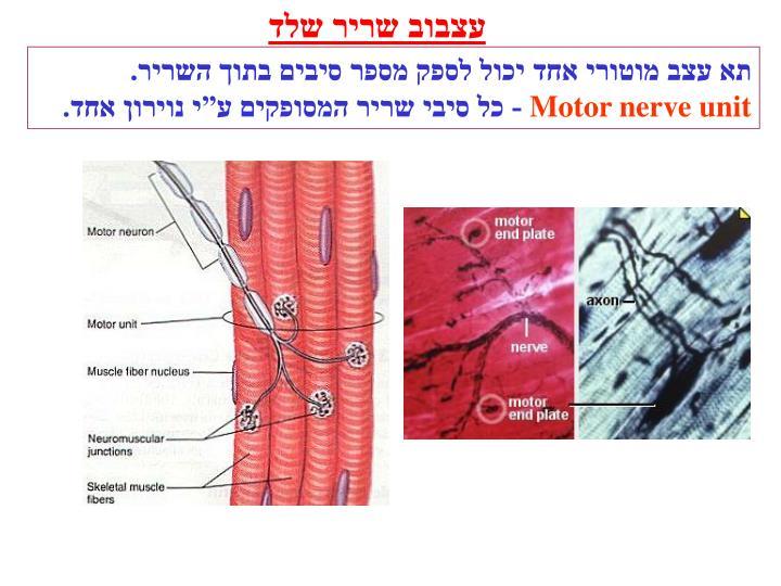 עצבוב שריר שלד