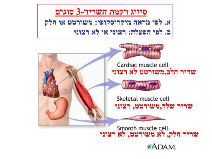 סיווג רקמת השריר-3 סוגים