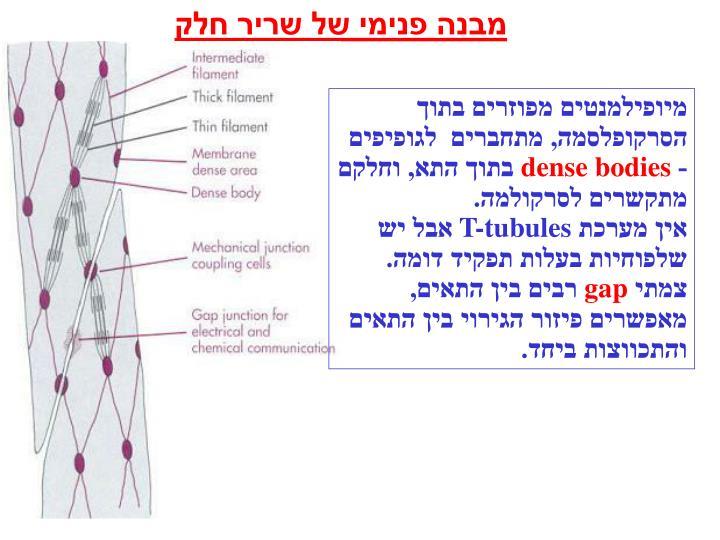 מבנה פנימי של שריר חלק