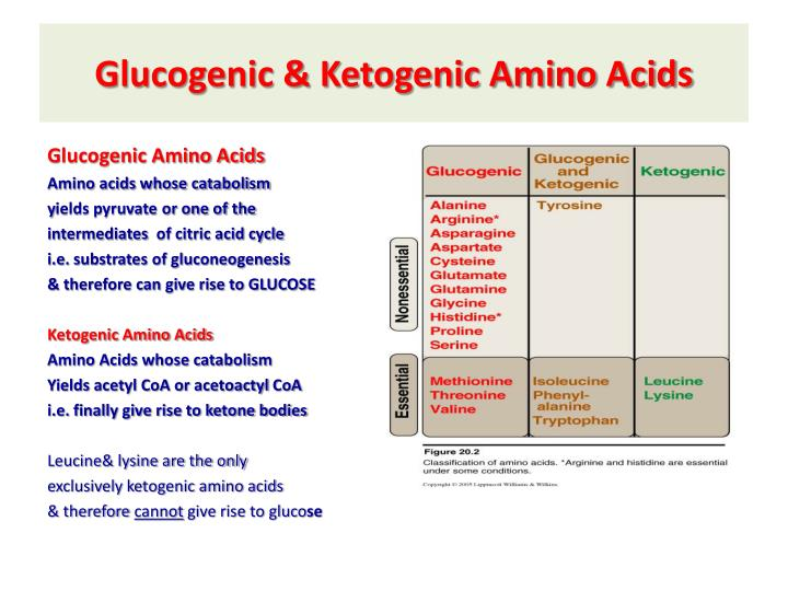 Glucogenic & Ketogenic Amino Acids