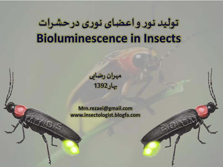 Bioluminescence in insects