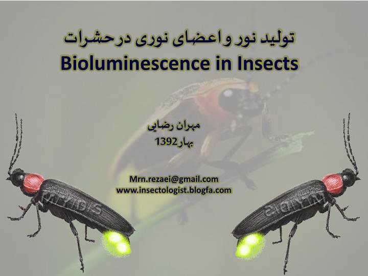 تولید نور و اعضای نوری در حشرات