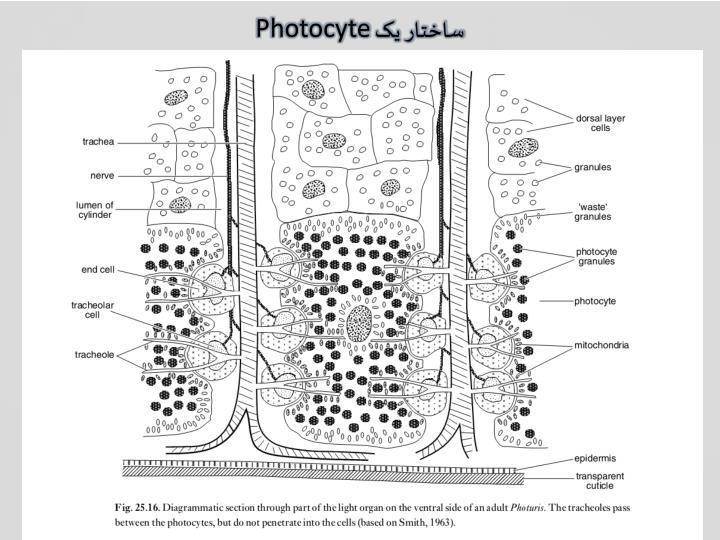 ساختار یک