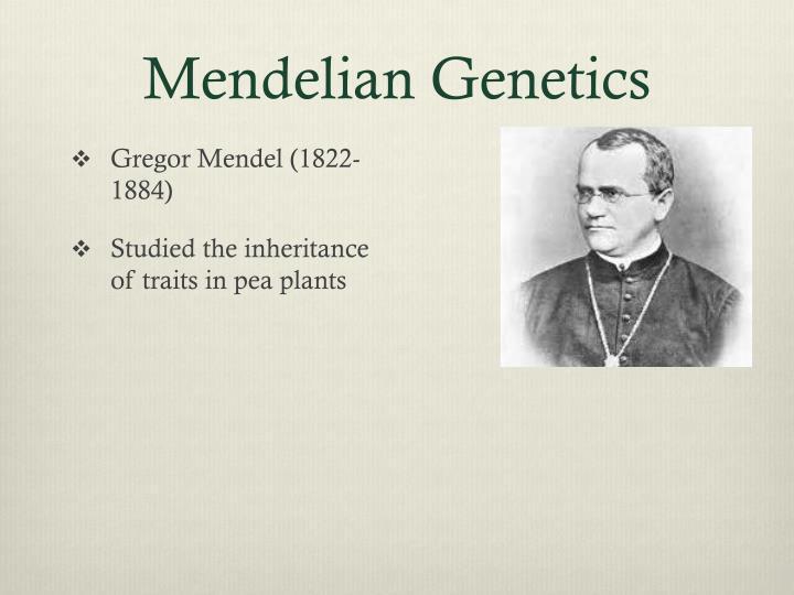 Mendelian Genetics
