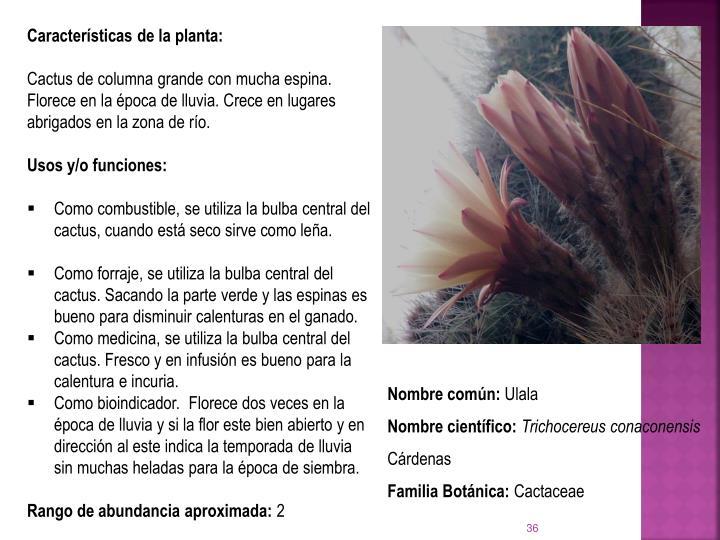 Caractersticas de la planta: