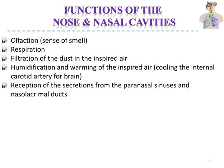Functions of the