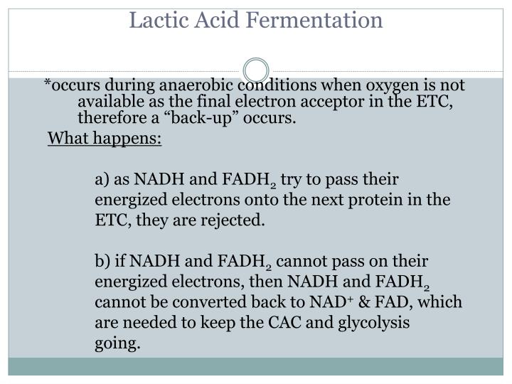 Lactic Acid Fermentation