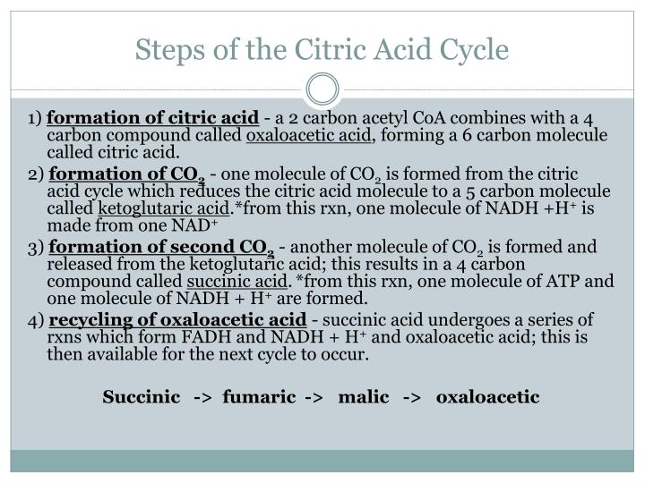 Steps of the Citric Acid Cycle