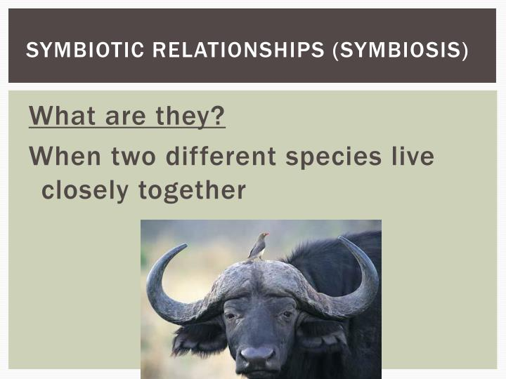 Symbiotic relationships (Symbiosis)
