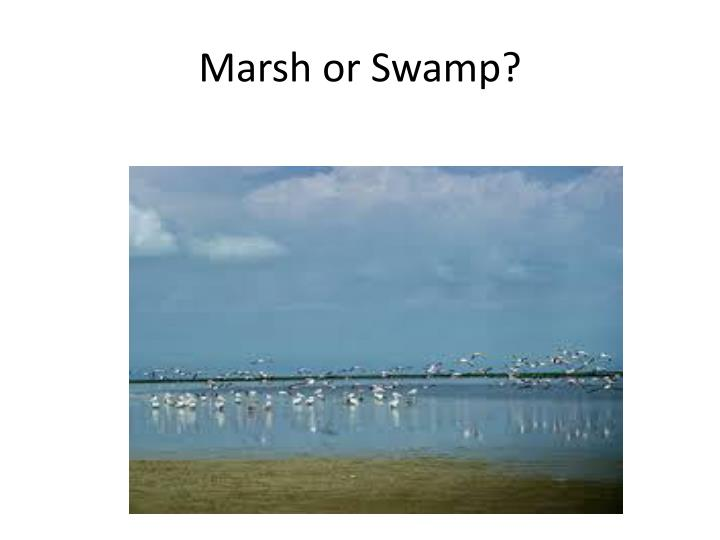 Marsh or Swamp?