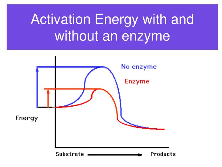 Activation Energy with and without an enzyme