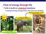 flow of energy through life