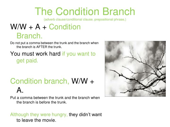 The Condition Branch