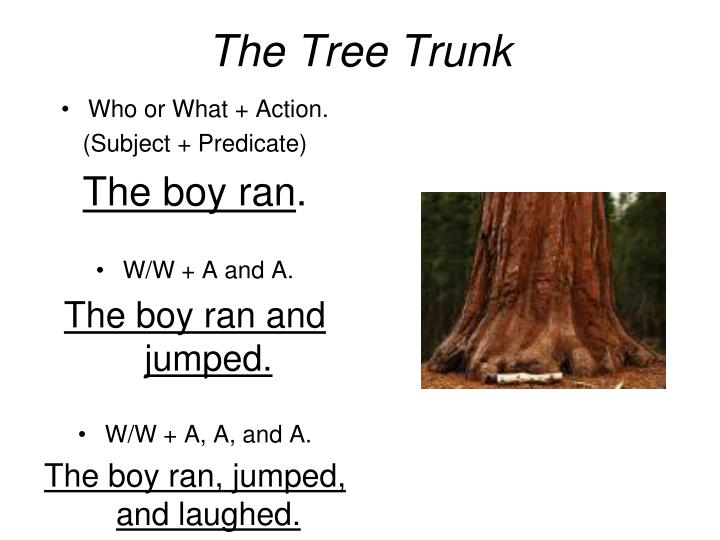 The tree trunk