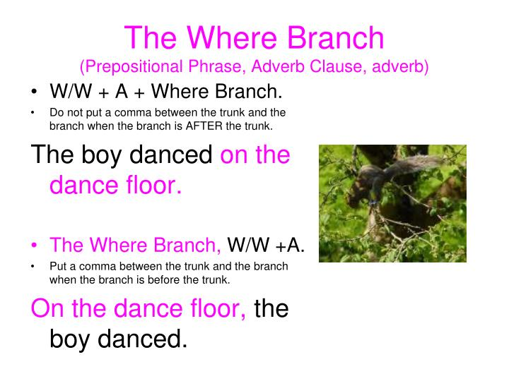 The Where Branch