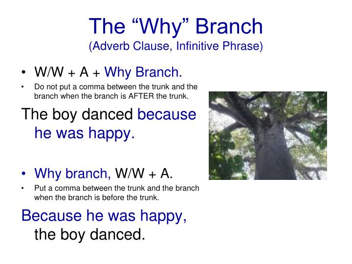 "The ""Why"" Branch"