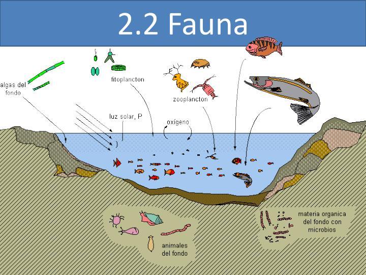2.2 Fauna