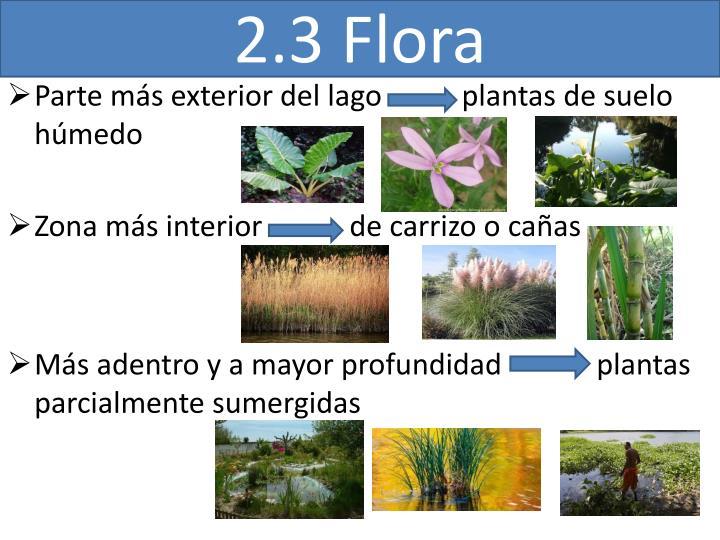 2.3 Flora