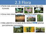 2 3 flora
