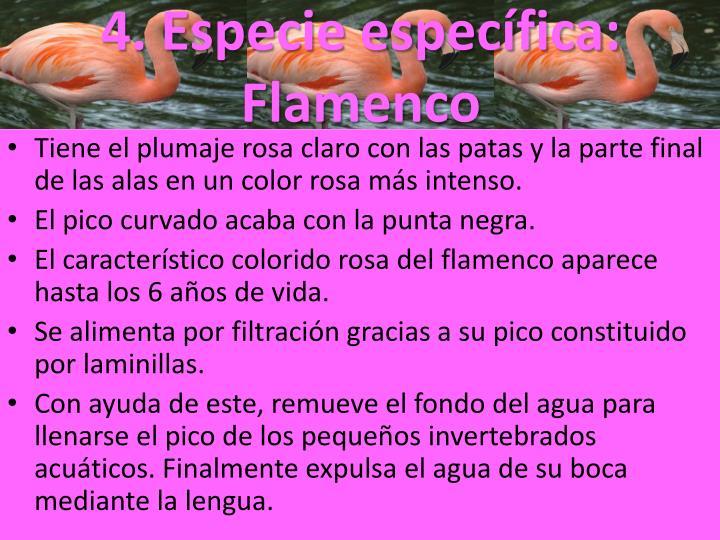 4. Especie específica: Flamenco
