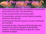 4 especie espec fica flamenco