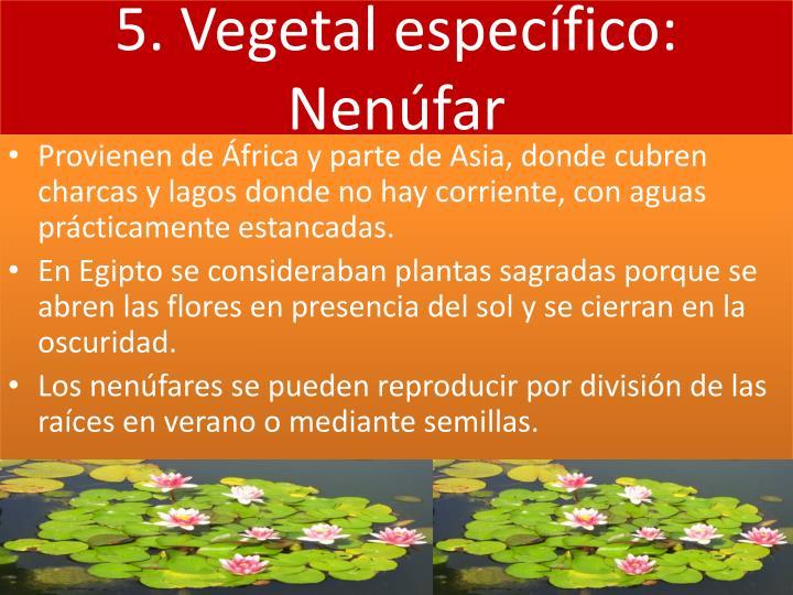 5. Vegetal específico: Nenúfar