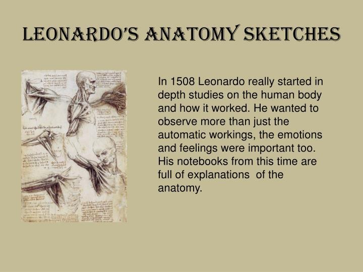 Leonardo's Anatomy Sketches