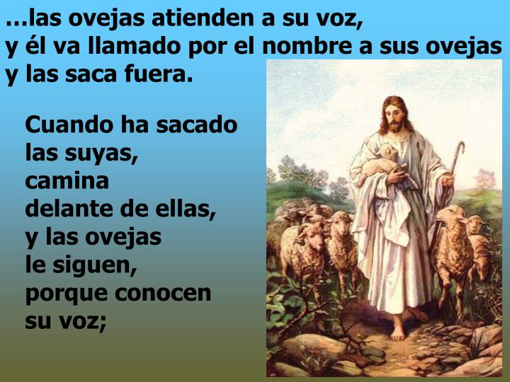 …las ovejas atienden a su voz,                                     y él va llamado por el nombre a sus ovejas y las saca fuera.