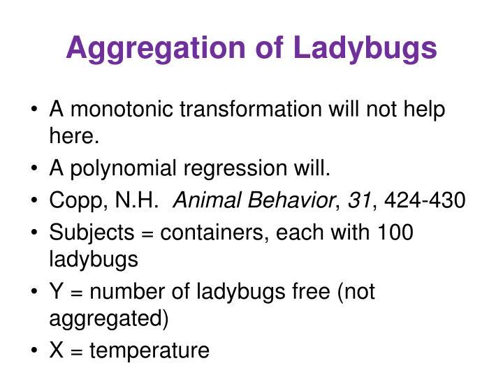 Aggregation of Ladybugs