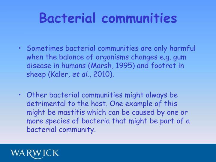 Bacterial communities