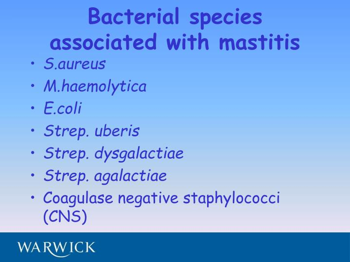 Bacterial species associated with mastitis