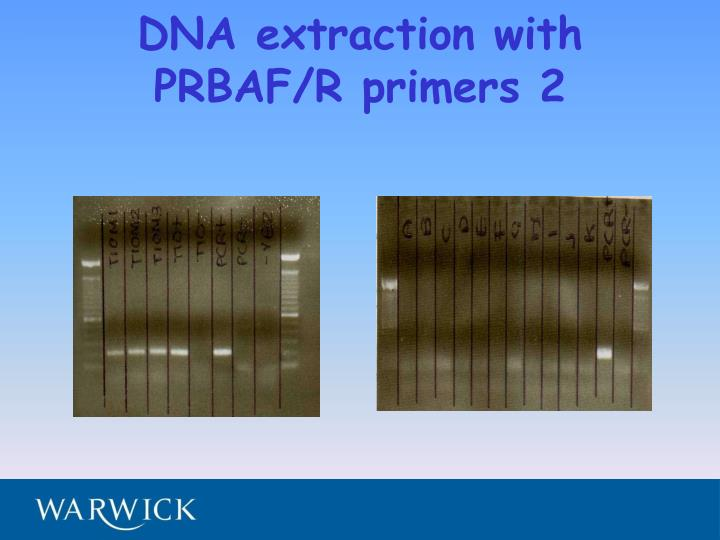 DNA extraction with PRBAF/R primers 2
