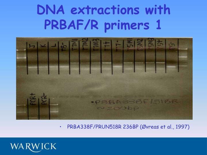 DNA extractions with PRBAF/R primers 1