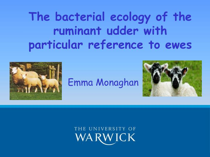 The bacterial ecology of the ruminant udder with particular reference to ewes