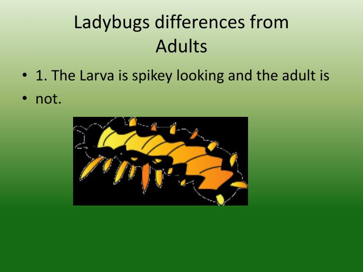 Ladybugs differences from
