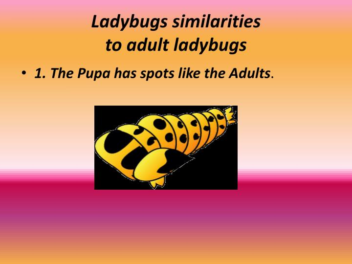 Ladybugs similarities