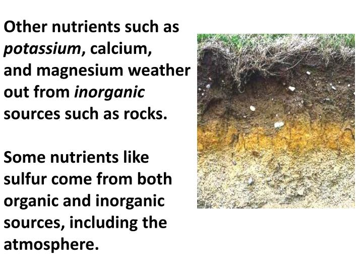 Other nutrients such as
