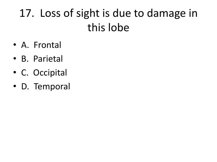 17.  Loss of sight is due to damage in this lobe