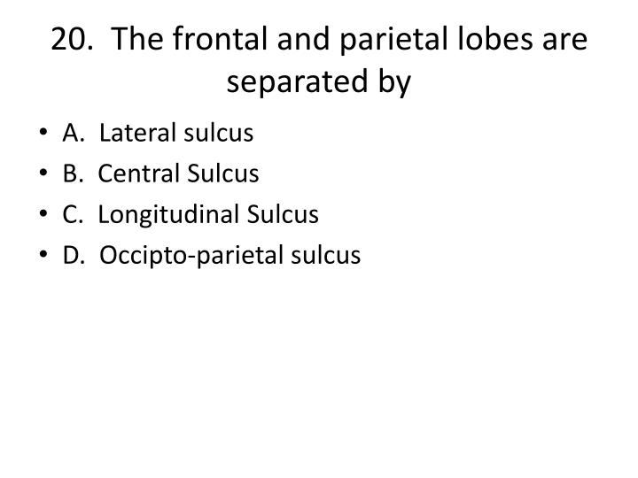 20.  The frontal and parietal lobes are separated by