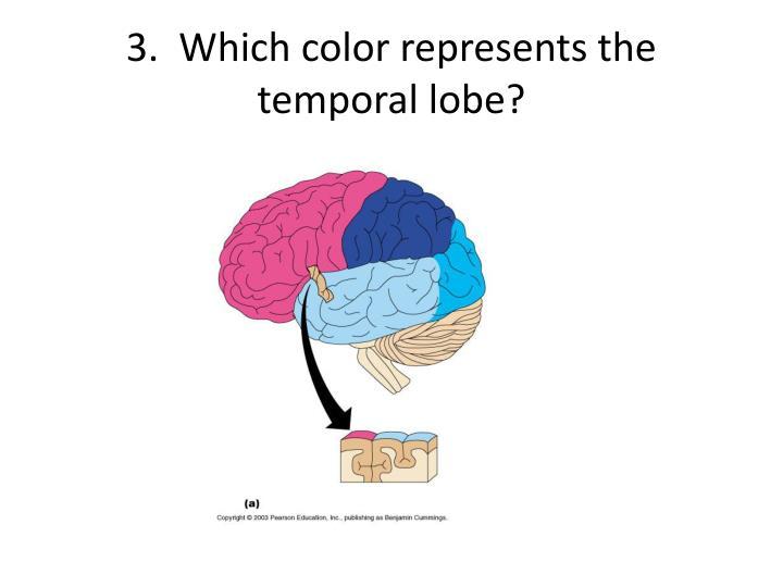 3.  Which color represents the temporal lobe?