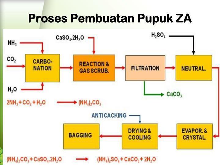 Proses Pembuatan Pupuk ZA