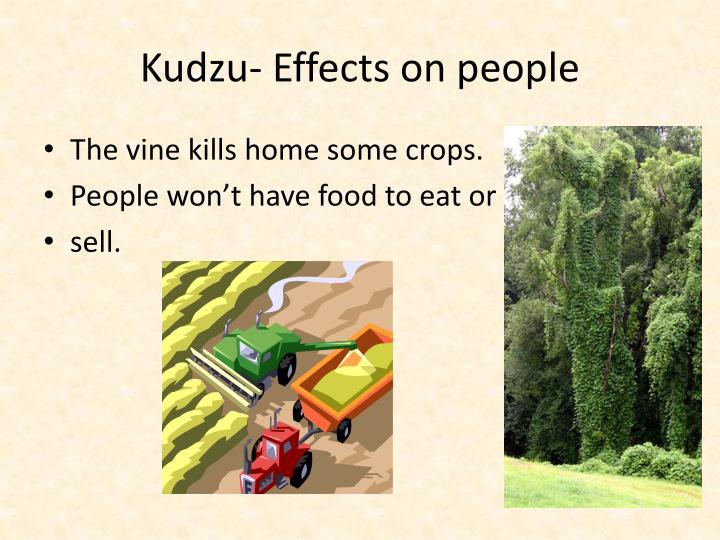 Kudzu- Effects on people