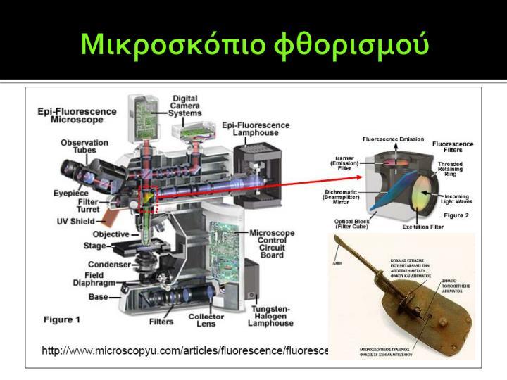 Μικροσκόπιο φθορισμού