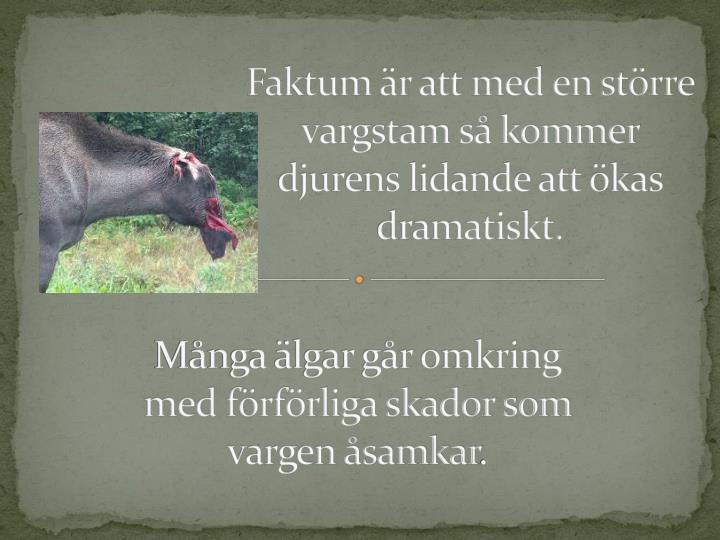 Faktum r att med en strre vargstam s kommer djurens lidande att kas dramatiskt.