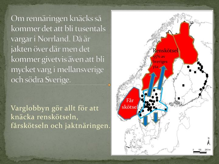 Om rennäringen knäcks så kommer det att bli tusentals vargar i Norrland. Då är jakten över där men det kommer givetvis även att bli mycket varg i