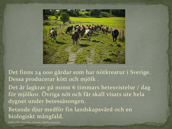 Det finns 24 000 grdar som har ntkreatur i Sverige. Dessa producerar ktt och mjlk .