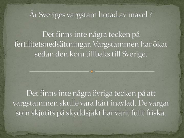 r Sveriges vargstam hotad av inavel ?