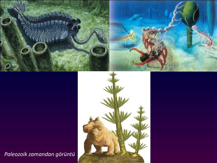 Erken Paleozoik yaam